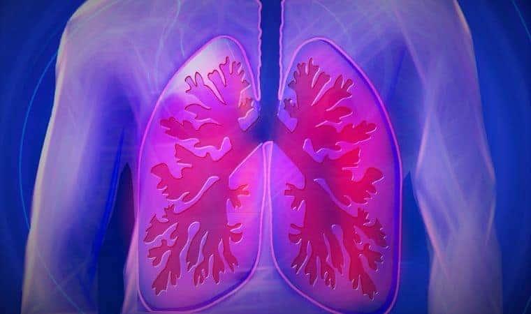 Lungs in upper body